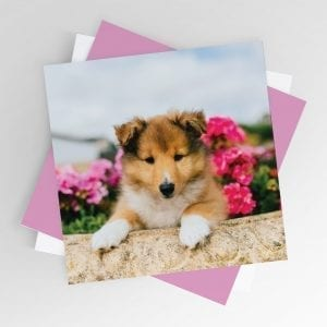 Puppy in the Flowers Card