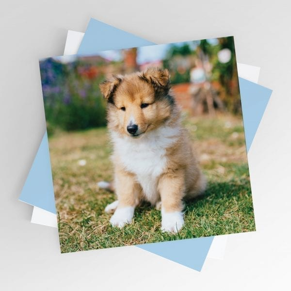 Puppy Smiling Greeting Card