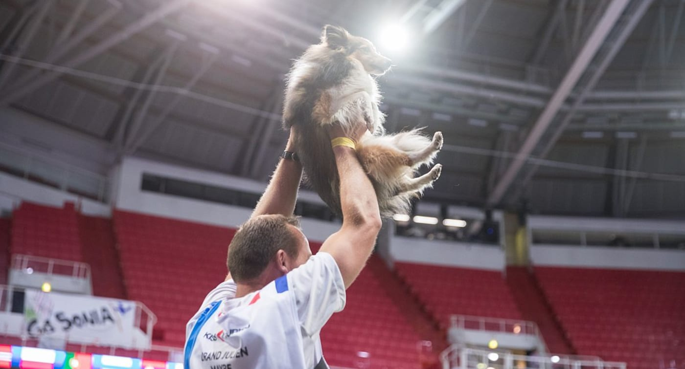 Julien Orand and Sheltie Maybe at the Agility World Championships 2019